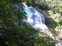 Floresta da Tijuca - RJ