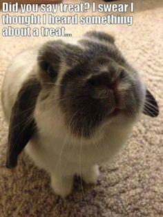"You said ""treat"", right?"