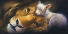 Lion and lamb...this is my favorite pic ever! Simply breath taking!