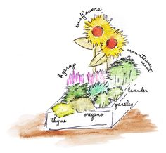 The Xerces Society » Blog Archive » Plants you can eat are a pollinator treat are a pollinator treat