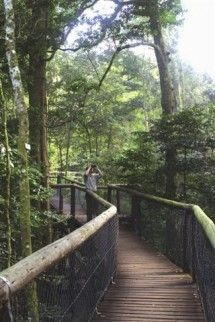 Experience a magical tree-top boardwalk in the indigenous forest canopy - Dirty Boots Magical Tree, Hiking Spots, Adventure Holiday, Adventure Activities, Tree Tops, Picnic Area, South Africa, Tours, Treehouses
