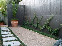 espalier {Would this work for raspberries?} love the grey backdrop. The lower half would be great for Kids to reach, a great activity and photo opportunity while adults are socializing on back patio