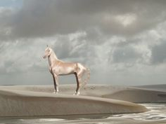 15 Breathtakingly Beautiful Horses The Akhal-Teke. Caballos Appaloosa, Haflinger Horse, Akhal Teke Horses, Dressage Horses, Most Beautiful Horses, All The Pretty Horses, Beautiful Creatures, Animals Beautiful, Massage Facial