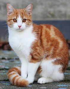 Adorable white and brown kitty cat