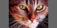 Ballpoint pen artwork titled 'Cat Face' (© Samuel Silva, http://vianaarts.deviantart.com)