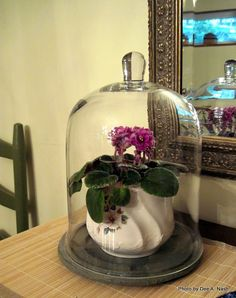 Snowbound thoughts: Part I, terrariums - Red Dirt Ramblings®