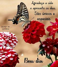 Bom dia especial Distant Relationship, Good Morning Greetings, Positive Affirmations, Lettering, 1, Doggies, Butterfly, Google, Design