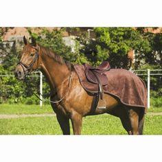 Umbria /Équitation finition harnais en cuir complet poney soin du cheval et /écurie finitions