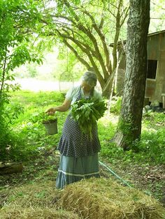 Momma ( Vicki) coming out of the garden with comfrey in one hand and a bucket of something in the other! Homestead blessings