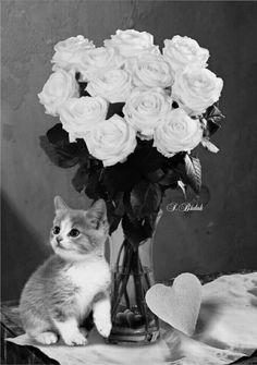 tolles die magie der bulgarischen rose beste abbild oder cfaaefcdbfba