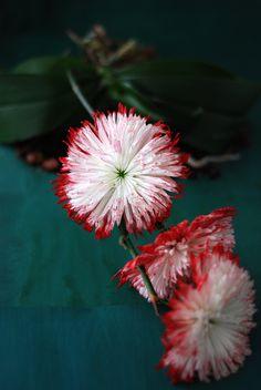 Flower arrangements - Stylingsinja