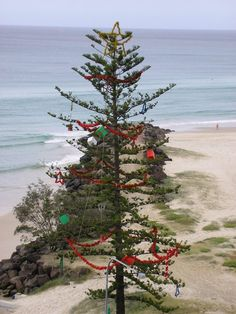 Australian Christmas is just a touch different: an Australian Christmas tree at the beach! Australian Christmas Tree, Aussie Christmas, Christmas Past, Christmas Holidays, Christmas Wreaths, Xmas, Tropical Christmas, Beach Christmas, Christmas In Australia