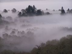 A Willamette Valley winter morning . . .