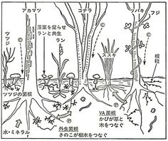 作物と土-菌根菌が植物をつなぐ