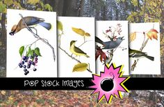 Check out Watercolor Birds on Branches Images by promodiva on Creative Market