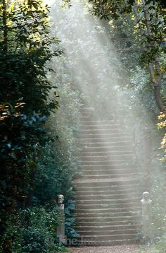 A steep stone staircase in the gardens of the Villa Medici is bathed in shafts of sunlight