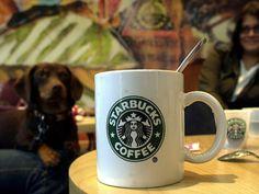Globalisierung (nicht nur Kaffe, sondern auch Unterhaltung), Konzept, Suchtfaktor und Kritik
