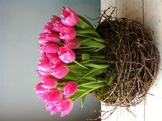 Nest of Tulips