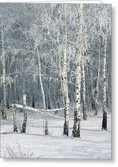 Birch Trees Greeting Card by Elena Filatova