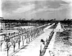 Bird's-eye view of a new tree-lined road heading toward the beach at Venice in Sarasota County. During the heady years of the Florida land boom, new developments popped up all along the Gulf Coast (1926).