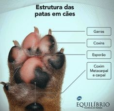 Dog Training Courses, Brain Training, Animals For Kids, Animals And Pets, Dog Anatomy, Pet Vet, Veterinary Medicine, Warrior Cats, Love Pet