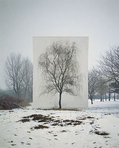 Tree #3 (Getty Museum)