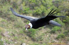 Especies en peligro de extinción del Ecuador