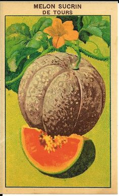 Vintage French Seed Pack Label ~ Cantaloupe