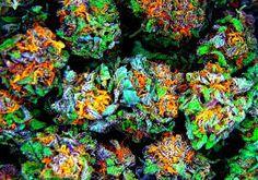 Order Rainbow Kush Online : Indica Dominant Hybrid - 70% Indica / 30% Sativa   THC: 17% - 22%, CBD: 1% the exact ratio of sativa to indica isn't clear. Buy Marijuana Online   Buy Weed   THC and CBD Oil. Medical, Cannabis, Weed, Oil, THC, CBD, Wax, Edib