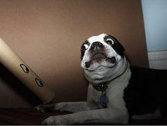37 perros que están totalmente asustados