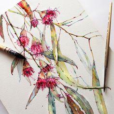 Eucalyptus in watercolor on Behance Botanical Art, Botanical Illustration, Watercolor Illustration, Art Floral, Watercolor Techniques, Art Techniques, Watercolor Flowers, Watercolor Paintings, Watercolor Artists