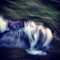 Ella on the run