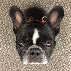 Los perros entienden lo que les decimos y cómo lo decimos