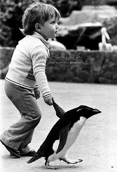 'Tee-Pee the penguin is clearly a high-flier. He behaves like a flipping hum being and there's nothing he like's better than a waddle with toddler Tony Taylor in Cotswold Wild Life Park in Burford, Oxfordshire.' Penguin and little boy walking hand in hand. September 1978 Copyright © MirrorPrintStore 2008 - All Rights Reserved. S)