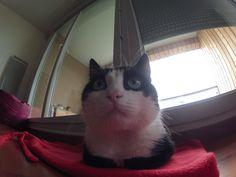 Petit test de la GoPro sur le Chat.