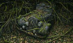 O fotógrafo americano Peter Lippmann criou um projeto fotográfico documentando belas imagens de carros abandonados em florestas, com a natureza se integrando ao metal organicamente, formando belas paisagens.