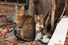猫はトルコの異国情緒によく似合う【画像多数】