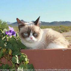 Ole Grumpy Blue Eyes