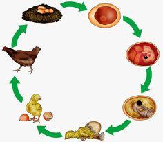 krabbelwiese: Huhn und Ei