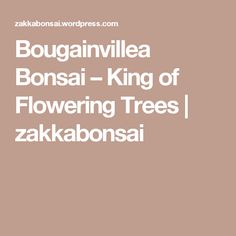 Bougainvillea Bonsai – King of Flowering Trees Bougainvillea Bonsai, Bonsai Trees, Hardy Plants, Flowering Trees, Potted Plants, King, Pictures, Flowers, Pot Plants
