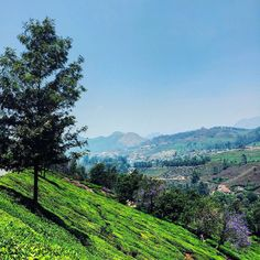 #Kerala #Munnar #teacountry #tea garden #travel #latergram #green #nature #beautiful sight for sore eyes #colors #India #indiaphotos #indiansummer #indiapictures #indiaphotosociety #igers_india #soi #_OYE #instatravel #natgeotravelpics #VSCOcam