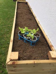 débuter le jardinage dans son carré potager Permaculture, Potager Palettes, Beignets, Barbecue, Garden Design, Backyard, Deco, Rose, Nature