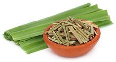 Poznaj prozdrowotne właściwości trawy cytrynowej i dowiedz się, przy jakich dolegliwościach warto ją zastosować. Zapraszamy do lektury bloga na ten temat. https://oliwka24.pl/wlasciwosci-lecznicze-trawa-cytrynowa/