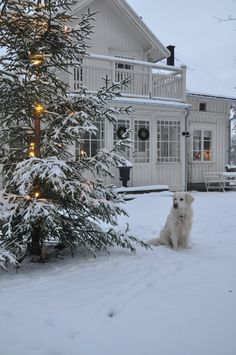 Do you love a tasteful white home exterior? Then these charming homes with white Christmas exterior decor may inspire.also sharing my trip to Arhaus. Christmas Porch, Christmas Scenes, Winter Christmas, Christmas Countdown, Winter House, Winter Garden, Winter Snow, Winter White, Cozy Winter