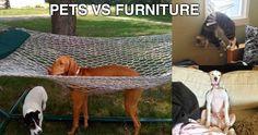 Pets Vs Furniture - 30 Pics