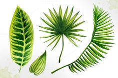 Set of 15 watercolor tropical leaves illustrations. these ambrosial tropical leaves make any design project come alive. Watercolor Texture, Watercolor Art, Watercolor Tutorials, Palmetto Leaf, Beach Mural, Leaf Illustration, Art N Craft, Leaf Coloring, Tropical Leaves