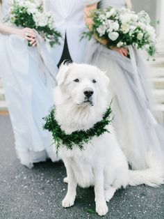 Mollie (dog) Appalacian Great Pyrenees Rescue - Stunning winter wedding inspiration in the fog by Amore Events by Cody (Creative direction, styling and decor) + Rachel May Photography - via Magnolia Rouge