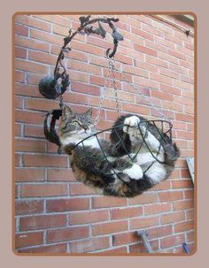 hanging out ♡...re-pinned by StoneArtUSA.com ~ affordable custom pet memorials for everyone