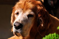 Lucky, 15 Retired Search and Rescue Hero + Founder of Dog Bless You.
