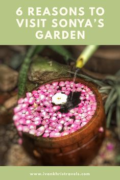 When traveling to Tagaytay, find time to include Sonya's Garden in your itinerary. These six reasons would hopefully convince you to do so. Siargao, Palawan, Coron, Cebu, Travel Guides, Travel Tips, Travel Advice, Beautiful Places To Visit, Cool Places To Visit